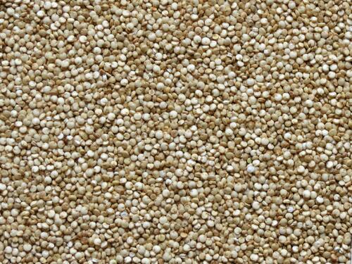 quinoa_01